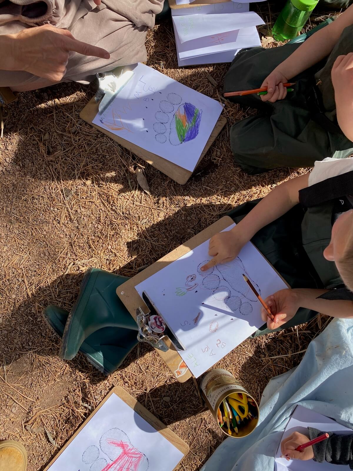 learning animal tracks with children outdoor learning activities at the forest school
