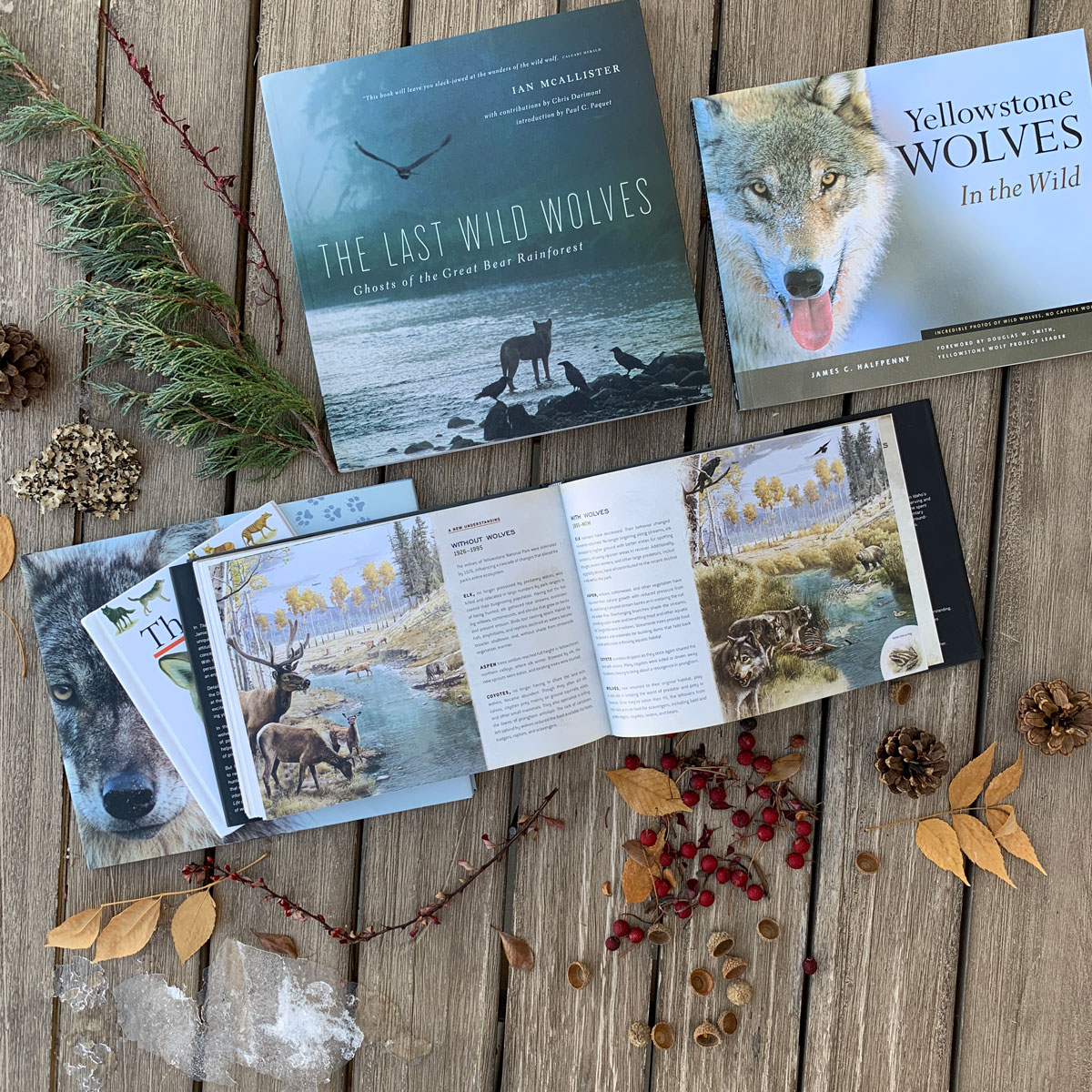 books about wolves Jim and Jamie Dutcher Ian McAllister