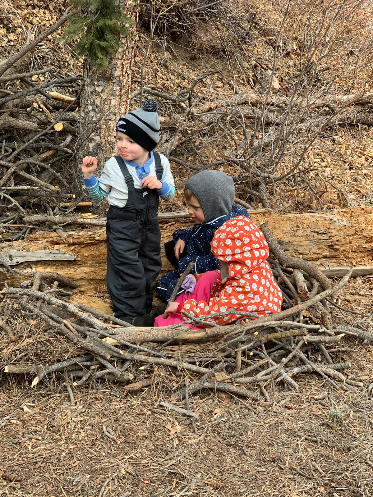Learning about birds at Colorado Springs nature kindergarten forest school nature preschool in Palmer Lake