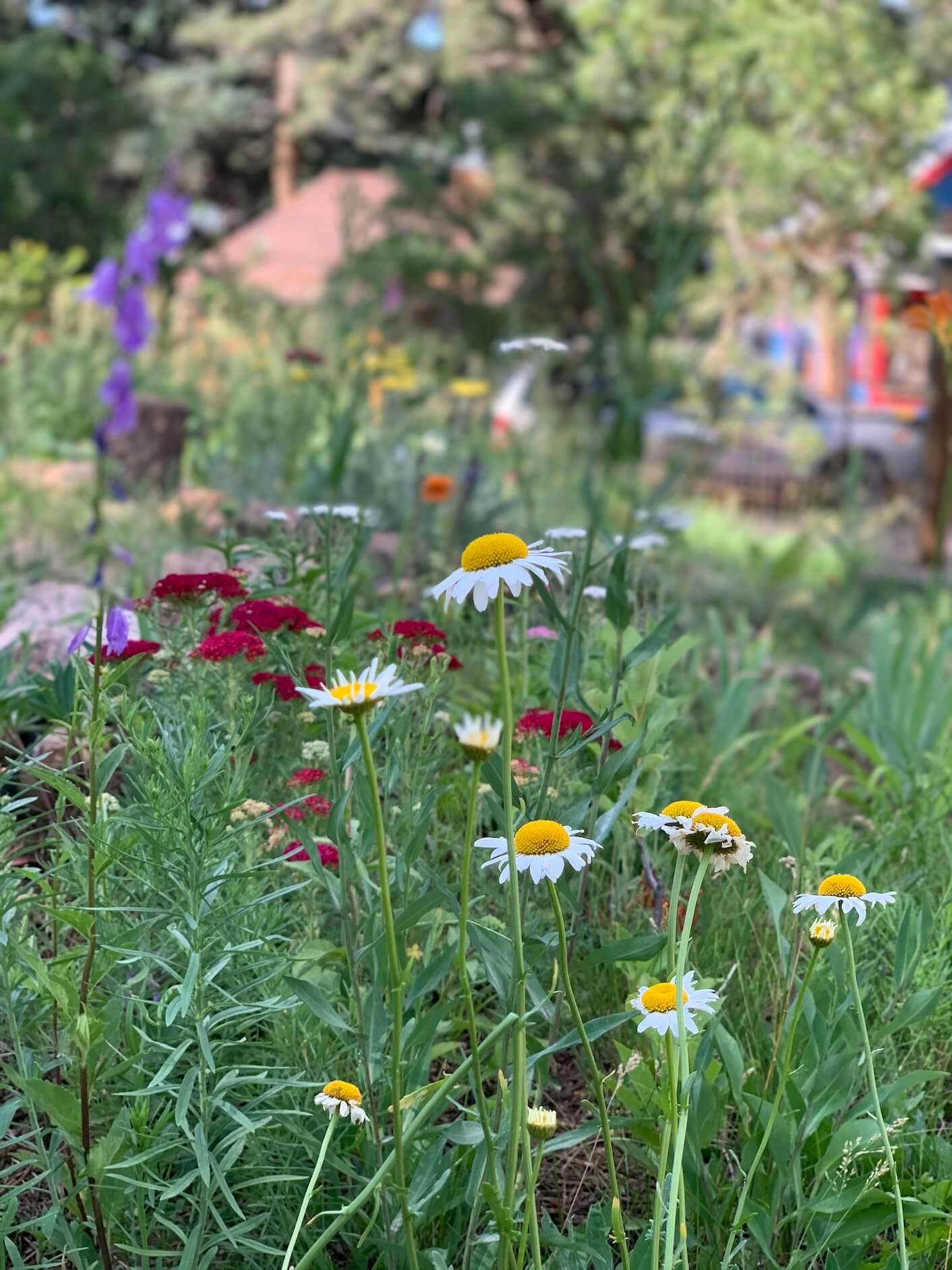 outdoor school Colorado Springs