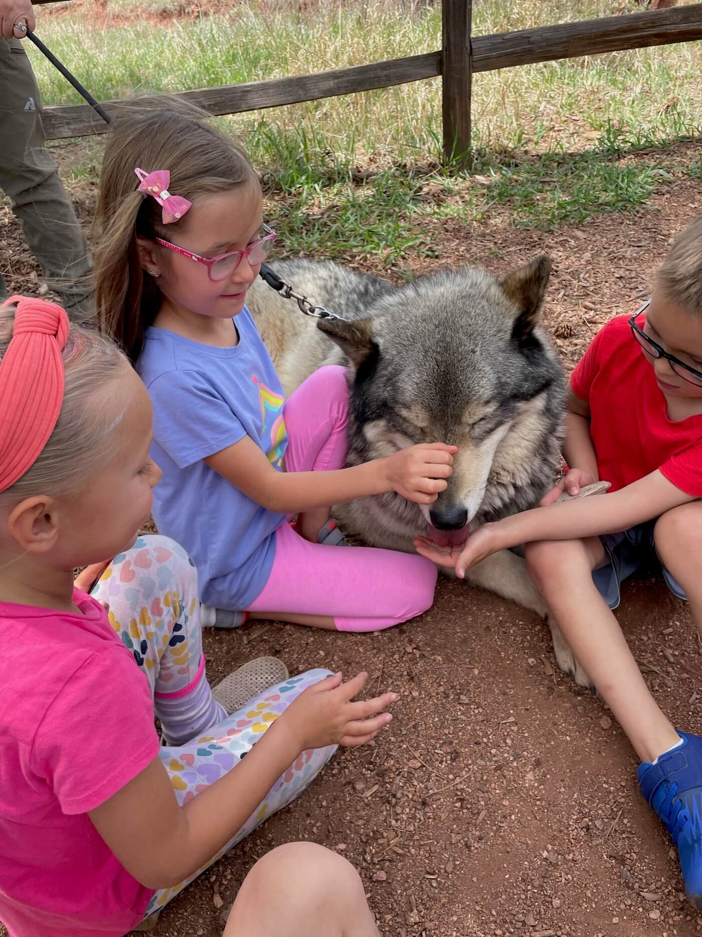 hanging out with the wolves